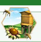 Beekeeping Gear